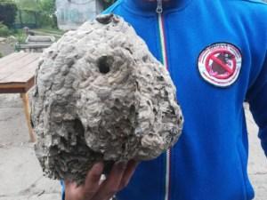likvidace vosích hnízd